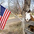 Anna_dulmesamerican_flag_intermediate
